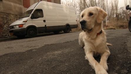 Una piccola casa per lui e il suo cane: quello che crea è davvero incredibile