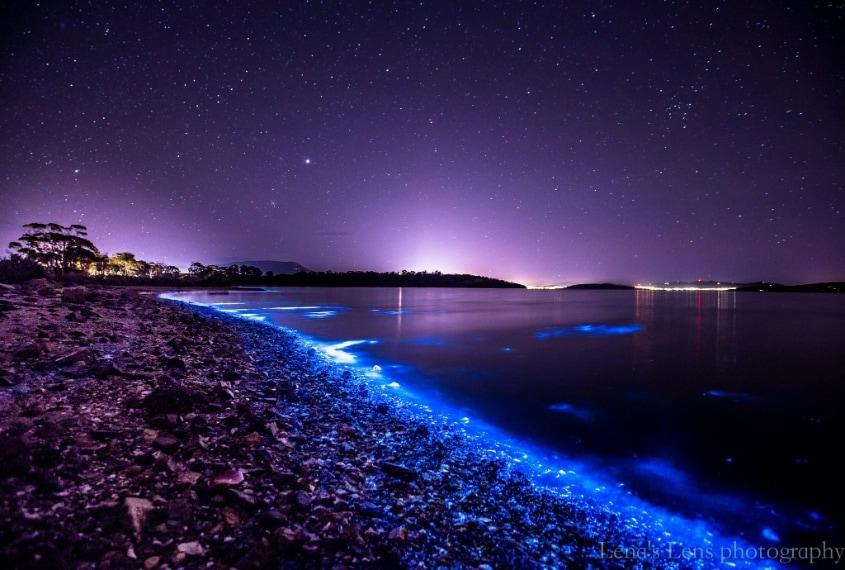 Si chiama bioluminescenza ed è un fenomeno davvero spettacolare.
