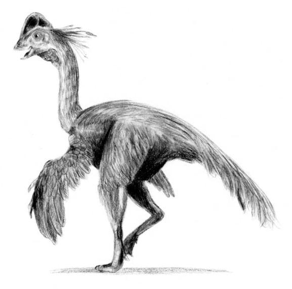 """Scientificamente il nome è """"Anzu wyliei"""" ed è estinto ormai da oltre 60 milioni di anni. Un gigantesco dinosauro lungo 3,5 metri e pesnate circa 300 chili che somiglia ad un grosso pollo per via del piumaggio e del becco (che sembra più quello di un grosso pappagallo). Gli scheletri di tre esemplari sono stati ritrovati nella zona tra il Nord e il Sud Dakota."""