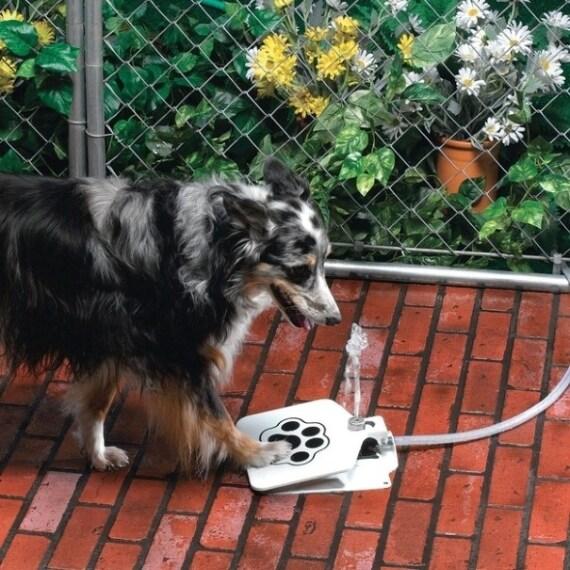Un erogatore d'acqua con pedale.