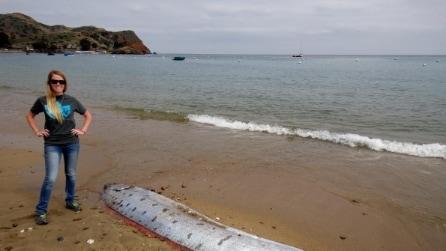 California, sulla spiaggia il misterioso mostro degli oceani