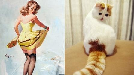17 Gatti che pensano di essere pin-up: impossibile non ridere