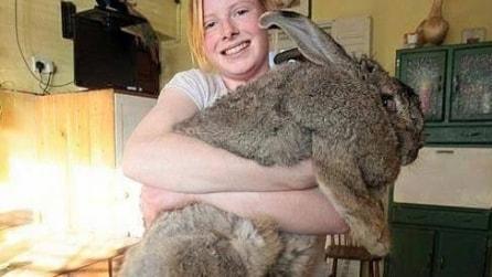 Conigili giganti da tutto il mondo
