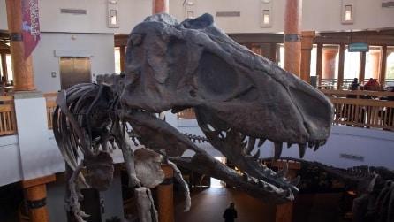 Le 10 attrazioni sui dinosauri più suggestive del mondo