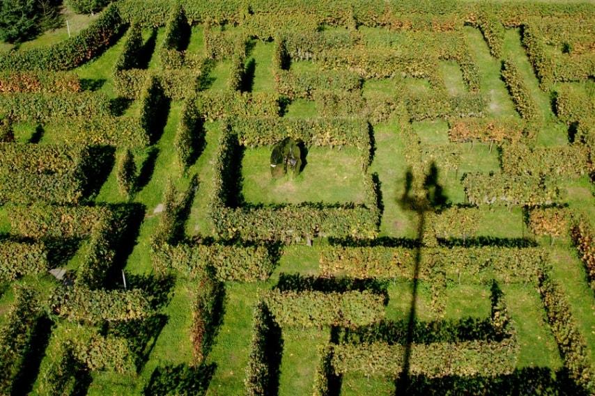 """È un raro esempio di labirinto """"vinicolo"""""""