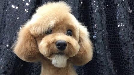 Le acconciature canine più deliziose che abbiate mai visto