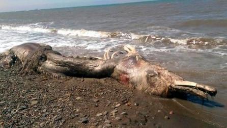 È lunga 2,4 metri: mistero sull'identità della strana creatura ritrovata in spiaggia