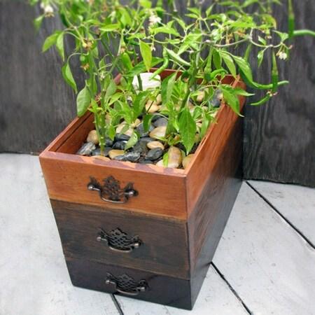 Il vaso per le piante