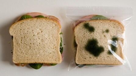 Inserisce il toast nel sacchetto e diventa subito ammuffito: il motivo vi sorprenderà