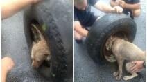 La cagnolina rimane con la testa incastrata nella ruota: l'incredibile salvataggio