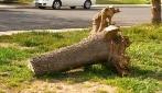 Trova un tronco per strada: la geniale idea di quest'uomo