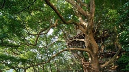 Kusukusu: ecco la più grande casa sull'albero del Giappone