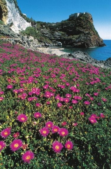 Toro - Spiaggia del Frontone a Ponza