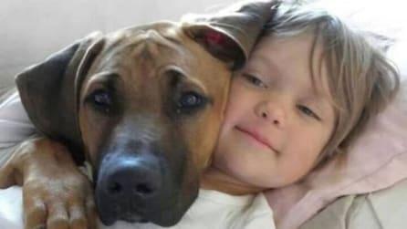 L'amore incondizionato: ecco come i cani lo dimostrano ai loro padroni