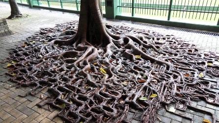La lotta tra la natura e il cemento: ecco le radici più strane del mondo