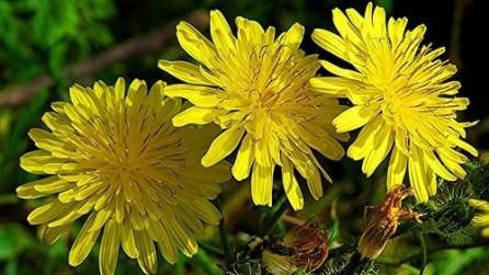 Le erbe curative che fanno bene alla salute