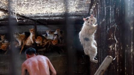 Cina, la storia del gatto fuggito dalla mattanza dello Yulin Festival