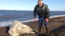 Un grosso orso polare è in difficoltà: ecco come viene aiutato
