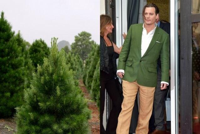 Giacca verde e pantalone marrone danno a Johnny l'aspetto dell'abete. Peccato che le feste sono ancora lontane