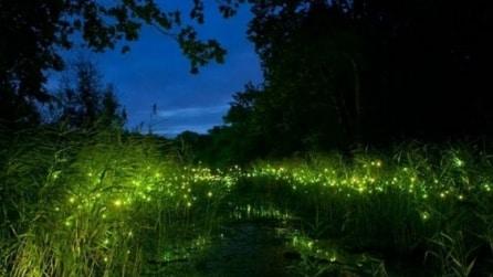 Cina: ecco il primo parco a tema per lucciole
