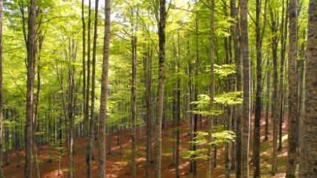 Italia da scoprire: i 10 parchi che vi faranno amare l'autunno