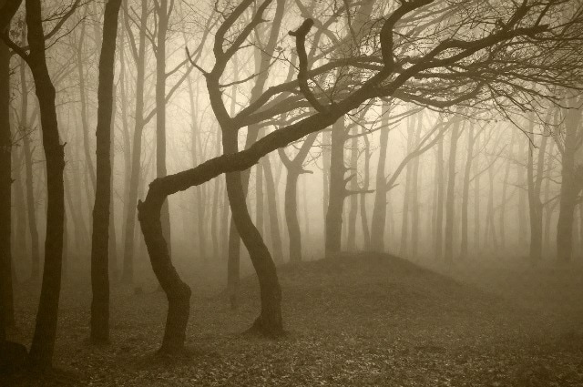È la foresta più spettrale al mondo: stiamo parlando della Hoia Baciu Forest, vicino a Cluj-Napoca. Tante storie di terrore e sparizioni, di avvistamenti di UFO e di apparecchiature elettriche che smettono di funzionare all'improvviso si raccontato su questo luogo, indicato per questo motivo come il Triangolo delle Bermuda della Romania.