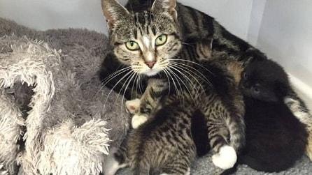 La gatta abbandonata che non vuole separarsi dai suoi cuccioli