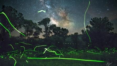 La valle piena di lucciole fluorescenti: le incredibili immagini