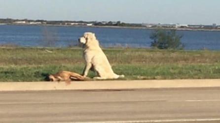 Hanno investito il suo amico ed il cane resta lì a vegliare su di lui per ore