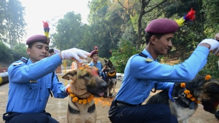 Kukur Tihar, la festa che in Nepal celebra i cani