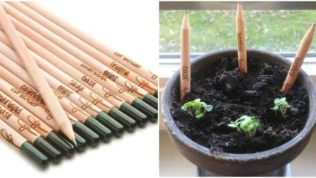 La prima matita che può essere piantata dopo l'uso: ecco cosa accade