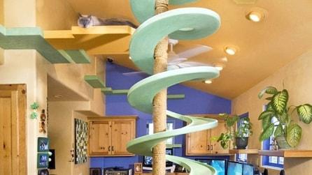 Ecco l'incredibile trasformazione di una normale casa in un paradiso per gatti