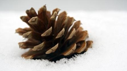 Basta una pigna: ecco le idee più creative per Natale