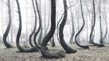 """La """"Foresta Storta"""": l'affascinate mistero in Polonia"""