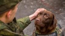 Attentati Parigi, il nuovo giubbotto antiproiettile per cani: l'idea dopo la morte di Diesel