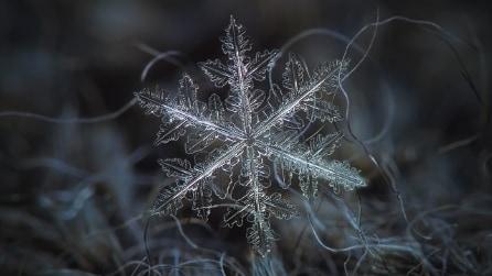 Fotografa i fiocchi di neve in primo piano: le incantevoli immagini