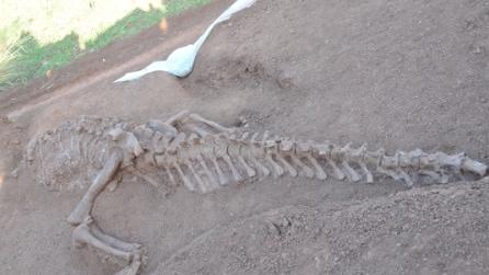 Cina, scoperto dinosauro fossile di 180 milioni di anni fa