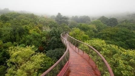Kirstenbosch Centenary Tree Canopy Walkway: il ponte che permette di camminare sugli alberi