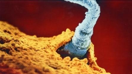 La magia della nascita: ecco tutte le fasi di sviluppo dell'embrione