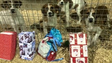 Sono in attesa di una famiglia che li adotti: ecco il loro Natale