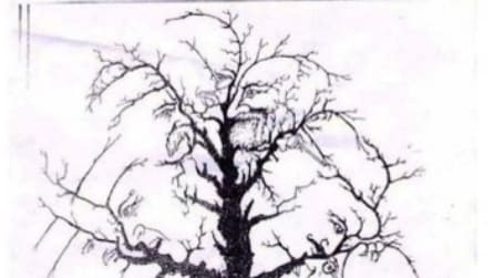 L'albero dei leader: quanti volti vedi? Ecco la risposta esatta