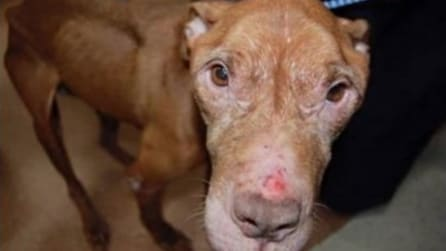 Il cane abbandonato ha il cancro, quello che fanno per lui è straordinario
