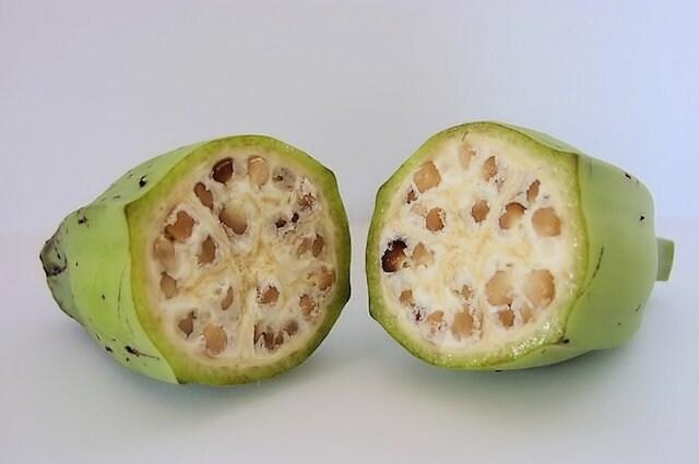 Coltivate già 7.000 anni fa, le banane apparivano molto diverse rispetto ad oggi. Erano infatti ricche di semi di grandi dimensioni, come mostrano le immagini. Credit: https://www.geneticliteracyproject.org/2014/06/19/how-your-food-would-look-if-not-genetically-modified-over-millennia/