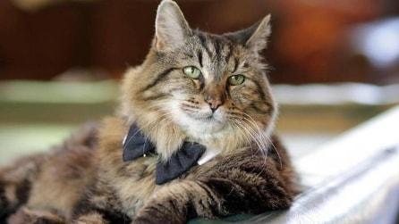 Il gatto che ha raggiunto il record del mondo: ecco cosa ha di speciale