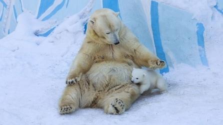 L'orsetto gioca per la prima volta con la neve: le tenere immagini