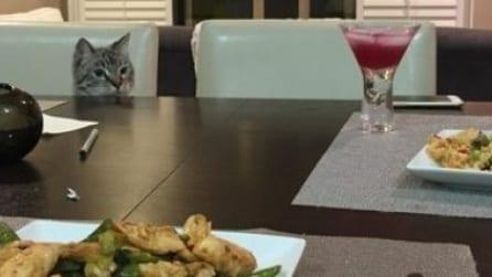 Ogni volta che siedono a tavola la stessa scena: quello che fa questa gatta è troppo divertente