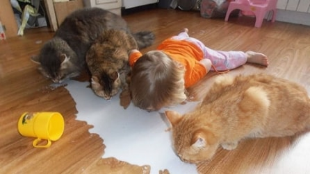 Bambino crede di essere un gatto e beve il latte insieme a loro