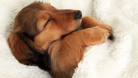 Teneri dormiglioni: ecco le immagini che vi scioglieranno il cuore