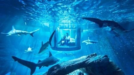 Airbnb sbarca nell'Acquario di Parigi: ecco la suite subacquea per dormire con gli squali