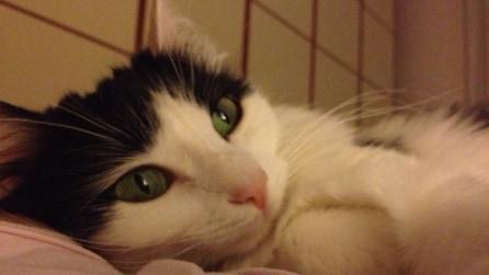 Scatto al gatto, ecco i mici più belli del web